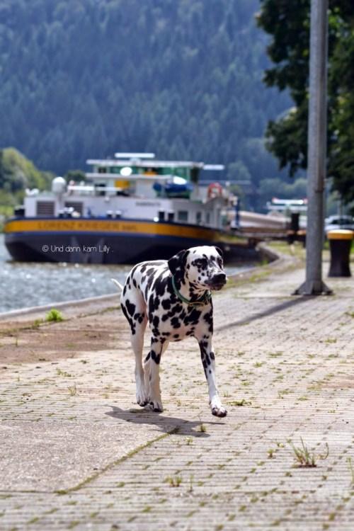 So schön ist es am Neckar. Foto: Und dann kam Lilly ...