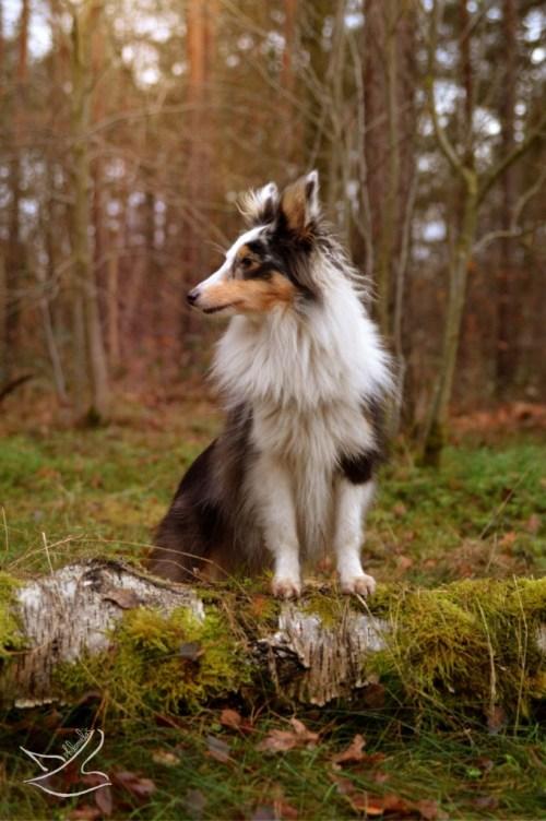 Auch im Wald eine ganz Hübsche: Frieda von Friedas Welt. Foto: Philomela / Friedas Welt
