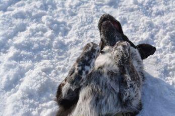 Unterwegs im Winterwunderland bei Habach: Ein Schneebad darf auf keinen Fall fehlen