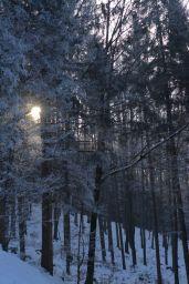 Die Sonne strahlt immer wieder zwischen den Bäumen hindurch