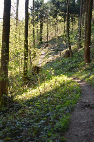 Der schmale Wanderpfad zum Adersberger Hof verläuft schattig parallel zur Straße