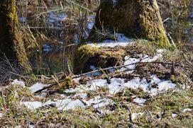 Allerletzte Schneereste im Tal