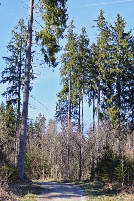 Zu dieser Jahreszeit noch etwas kahl empfängt uns der Wald.