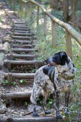 Mika lässt sich von den Stufen nicht schrecken...