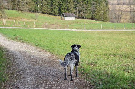 Langsam führt unser Weg wieder ins Tal hinab