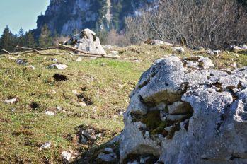 Maureralm