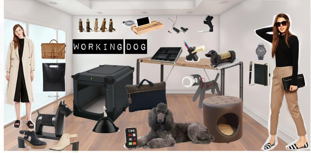 Schönes Hundeleben: Working Dog - mit Hund im Büro
