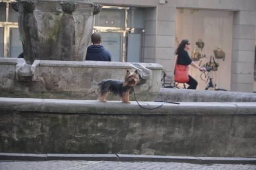 Auch für Stadthunde gibt es vieles zu erkunden: mit Yorkie unterwegs in Münster. Foto: Yorkshire Terrier Blog