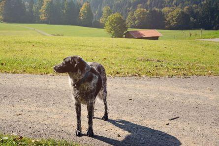 Mika wartet, dass es weitergeht