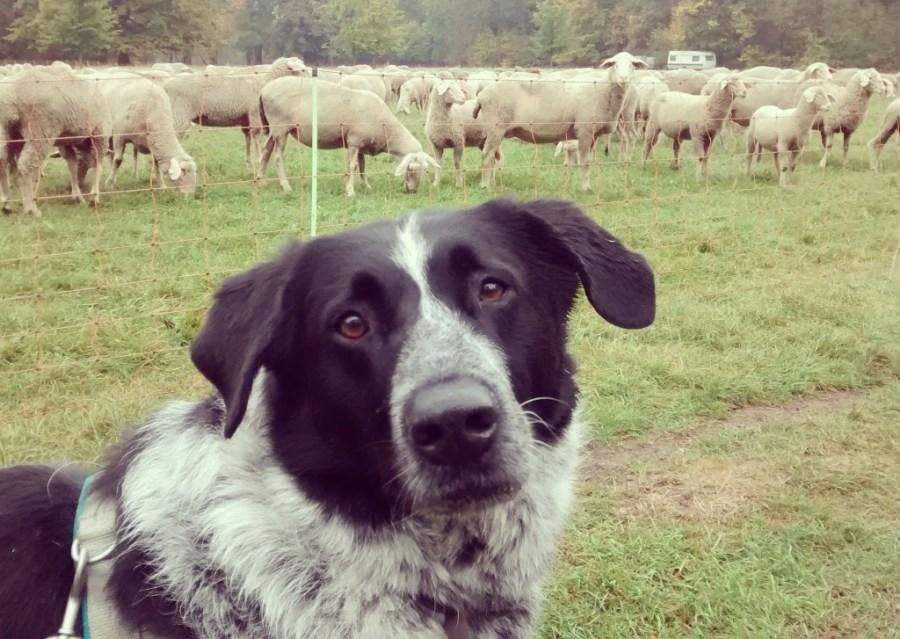Mika mag Schafe :D