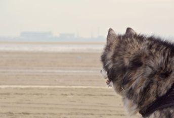 Denyo bewacht die Küstenlinie