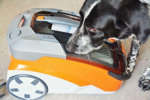 Partners in crime: Mika und der Thomas Aqua+ Pet and Family