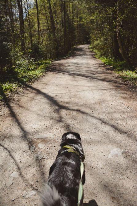 Ein breiter Fahrweg führt uns durch den Wald Richtung Gipfel.