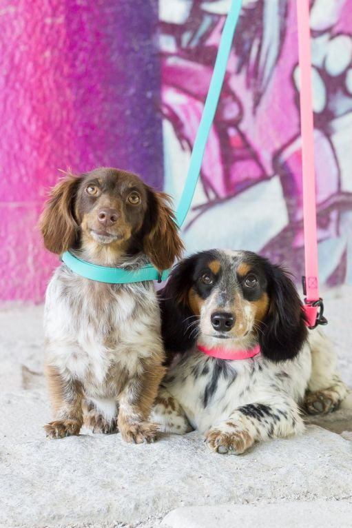 Stilvolle Accessoires für Hund und Halter, nachhaltig gefertigt und aus hochwertigen Materialien - dafür steht TREUSINN. Foto: Ⓒ TREUSINN