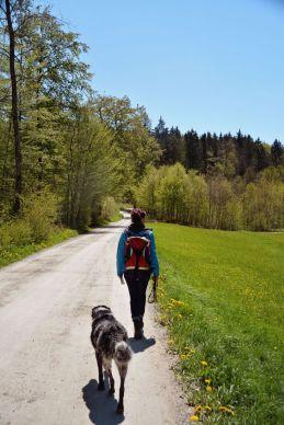 Unsere Route führt auf breiten, gut begehbaren Wegen zunächst parallel zum Lüßbach