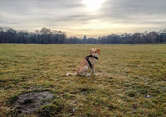 Hund Englischer Garten München
