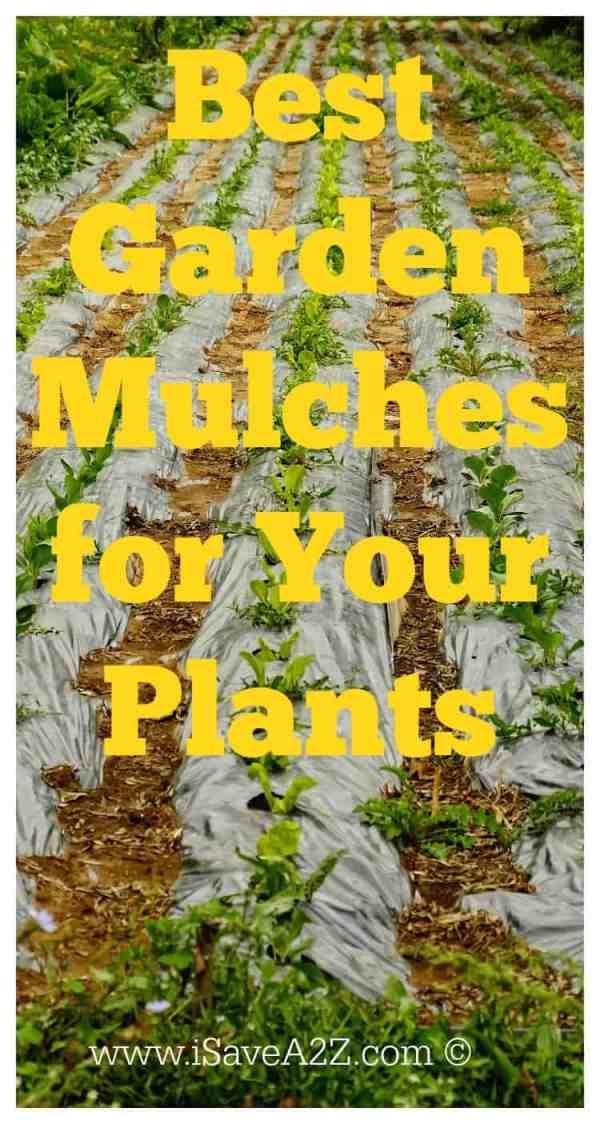 garden mulch plants