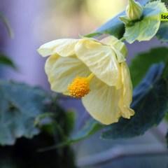 I Giardini La Mortella di Forio aperti anche in inverno