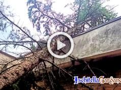 Albero caduto Ischitella