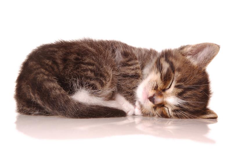 https://i0.wp.com/www.isciencemag.co.uk/wp-content/uploads/2011/02/sleeping_kitten.jpg