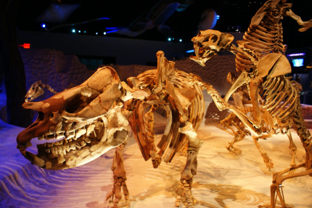extinct Dallas Krentzel 3825133154_fc4ac819b4_b