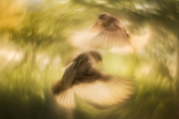 blurry photo of birds