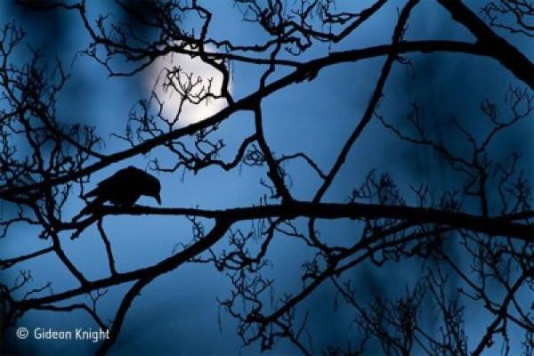 shadow of bird in tree