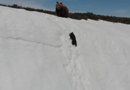 Bären Rutschpartie