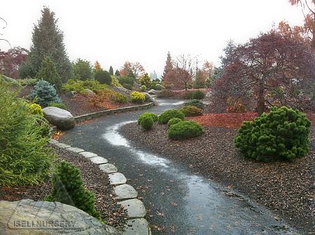 Stormy Garden