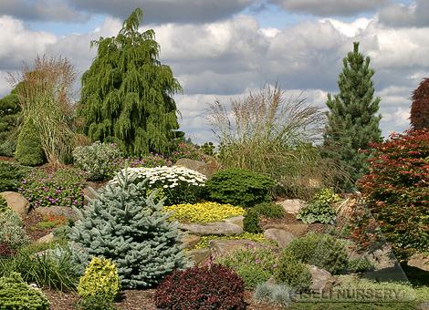 Premium garden plants