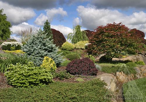 Diverse conifer garden