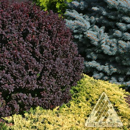 Primary color plants