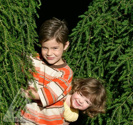 Kids love their weeping hemlock.