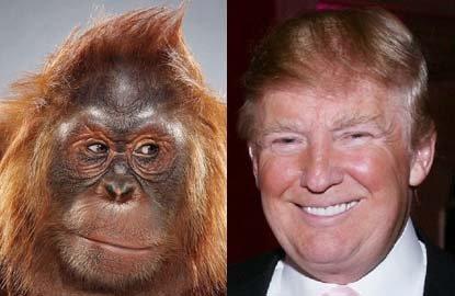 Trump comparison