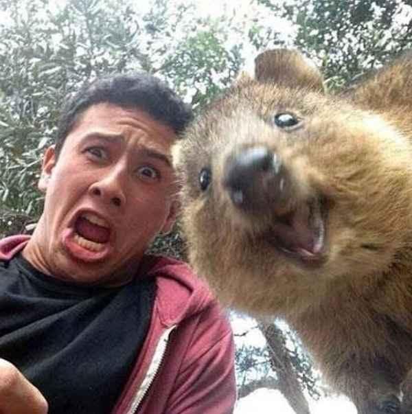 Quokka_Selfies