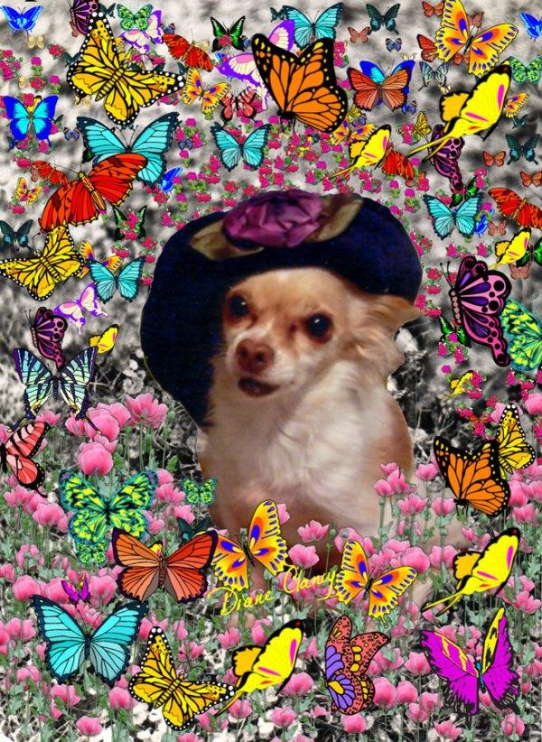 Chi Chi Chihuahua Dog in Yellow, Red, Blue, Rainbow Butterflies | Mug