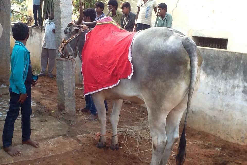 From Village to Village in Andhra Pradesh