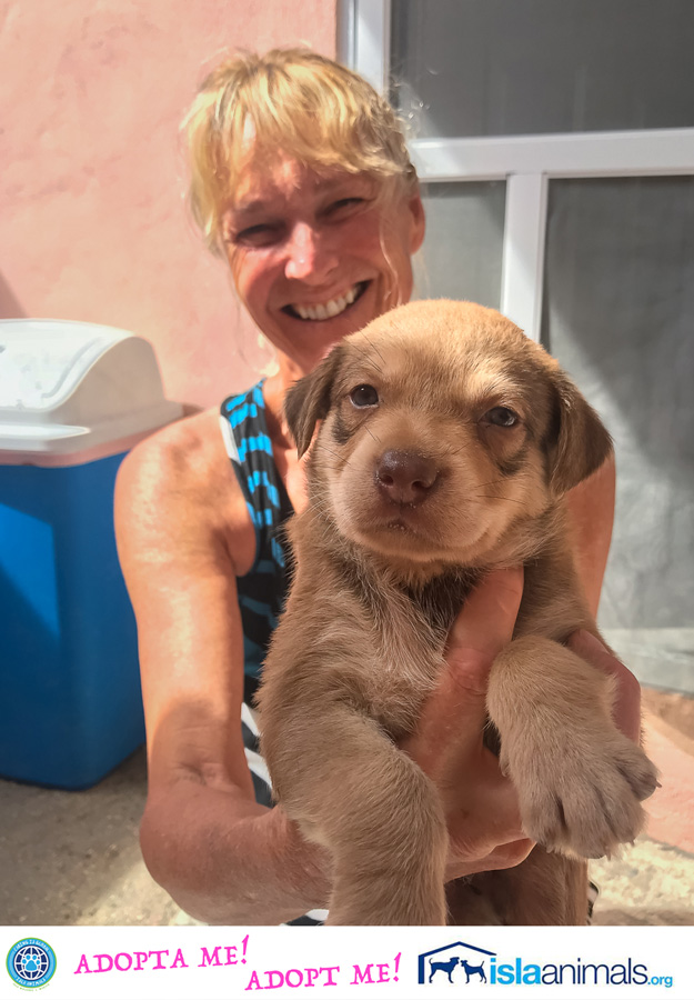Rachel's 8 Puppies