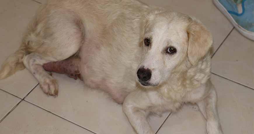 freya mama dog isla animals white dog