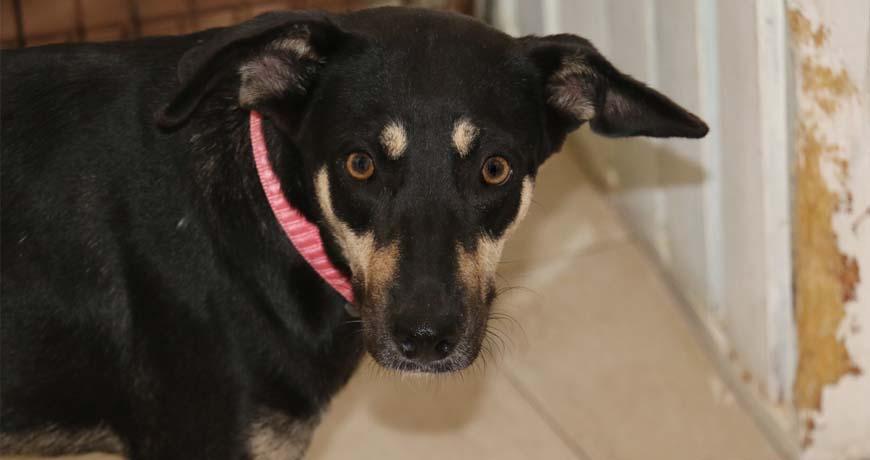 fancy dog for adoption in mundaca