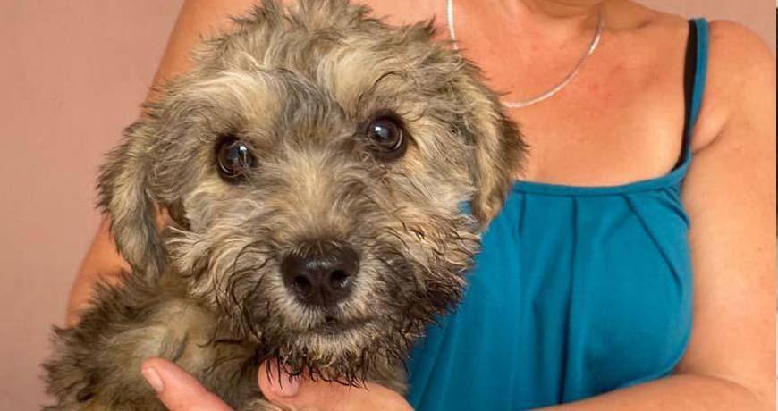 dog for adoption isla animals