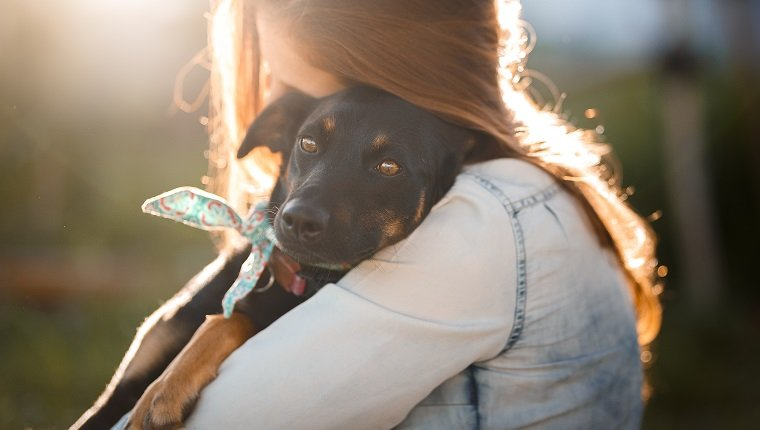 Summer happy stories of dogs going home!