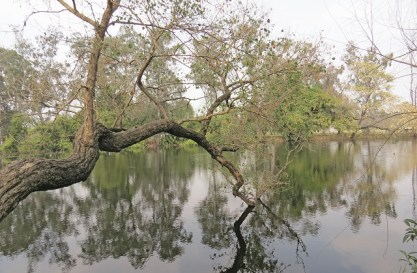 The lake in Ayub Park is shaded by acacia nilotica trees