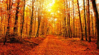 Photo of Fall Season: the Mark of a Fresh Start