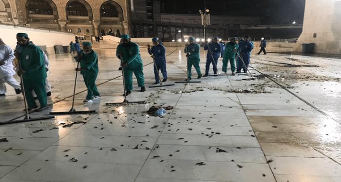 Serangga memenuhi Masjidil Haram. Foto: Morocco World News