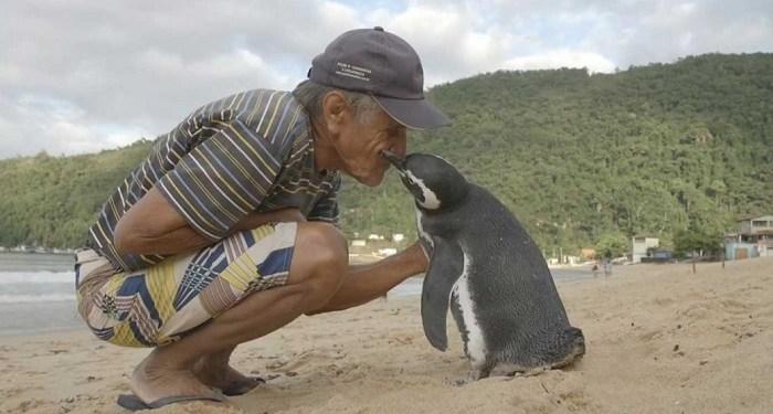 Din Din penguin bersama pria yang pernah menyelamatkan hidupnya. Foto: Adaptnetwork