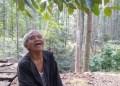Kakek Suhendri menanam pohon untuk pasok oksigen. Foto: Tribunnews