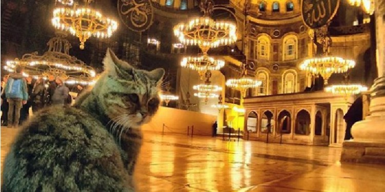 Gli. Foto: Instagram Hagia Sophia Cat