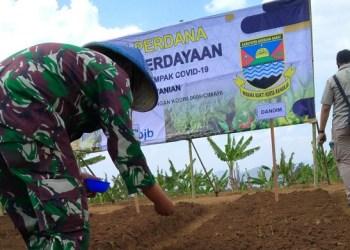 Kodim 0609 Cimahi dan pemerintah Kabupaten Bandung Barat menyediakan fasilitas berupa tanah pupuk dan Bios 44 untuk petani. Foto: Saifal/Islampos