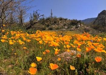 Ilustrasi musim semi. Foto: Twitter